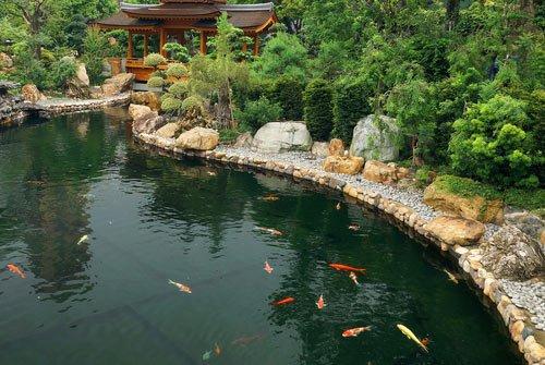 designing a koi pond