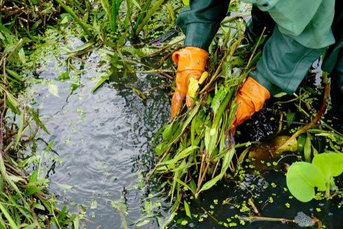 bog filter plants